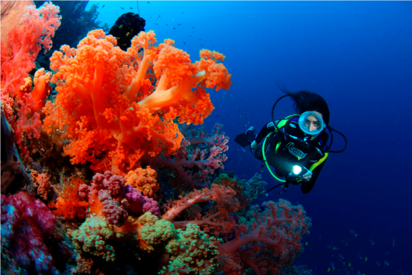 Scuba-Diving-Fiji-Soft-Coral-Waidroka_600